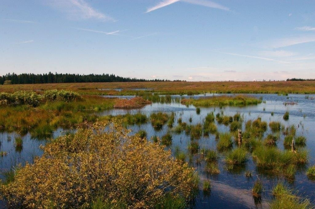 Tiere und Pflanzen im Brackvenn - Ornithologisch-naturkundliche Exkursion