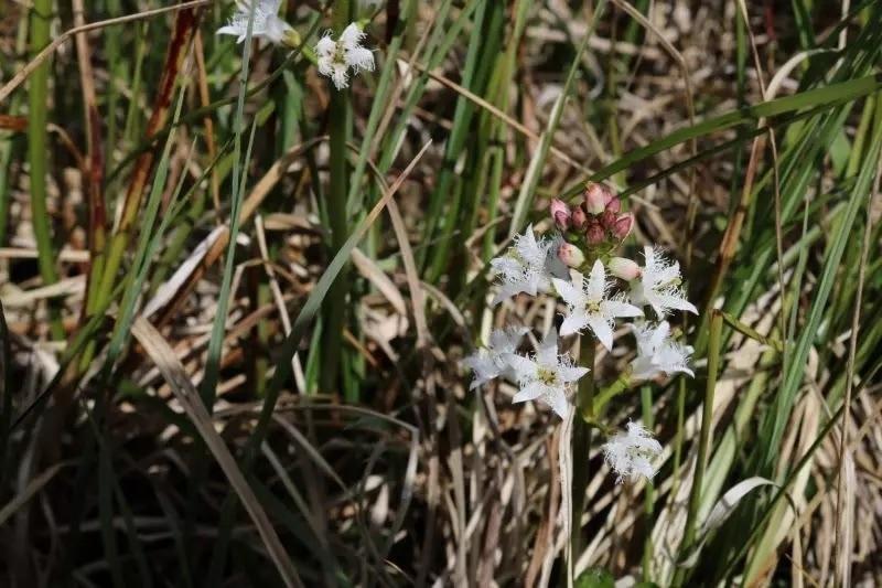 Geführte Wanderung: Das Bienenvenn, das Stattetal & Grande Fagne