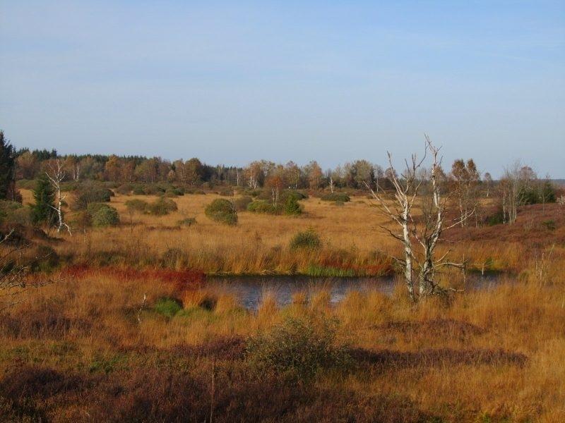 Das Brackvenn: geologisch und landschaftlich ein bedeutendes Naturreservat