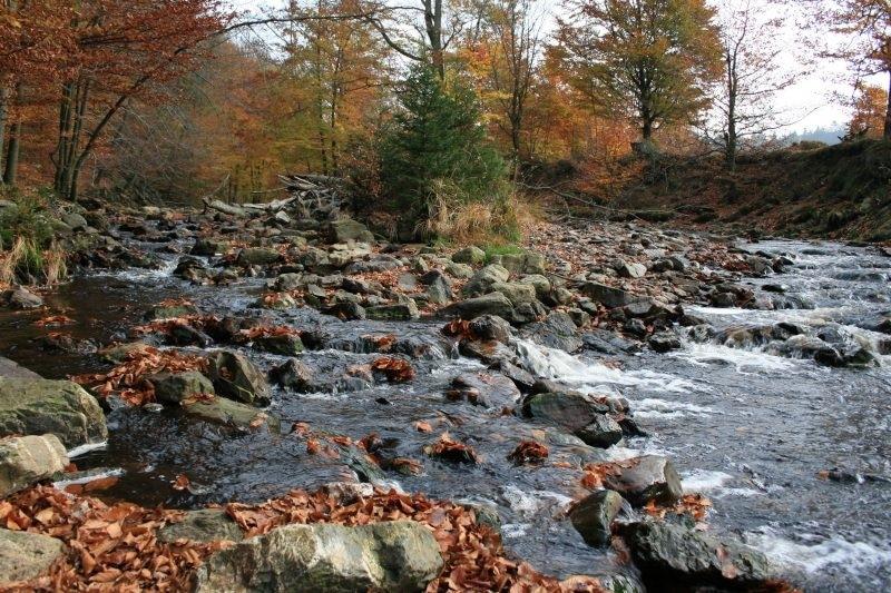 Venngucker – Natur am Nachmittag!