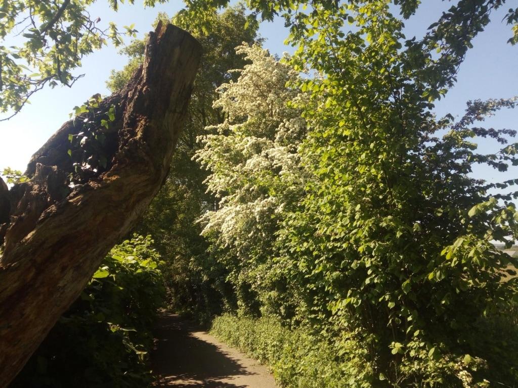 Wanderung des LAC Eupen