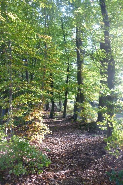 Waldbaden - Die heilende Kraft des Waldes