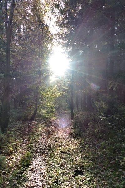 Shinrin Yoku – Die Atmosphäre des Waldes atmen