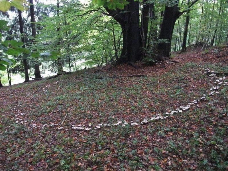 Von Krötenstühlen und Hexenringen - Exkursion zur Pilzbestimmung.