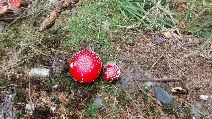 Die Welt der Pilze - Naturseminar