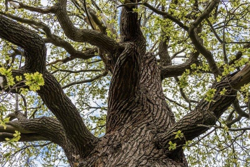 Das alte Wissen der Bäume - Spirituelle Baumwanderung