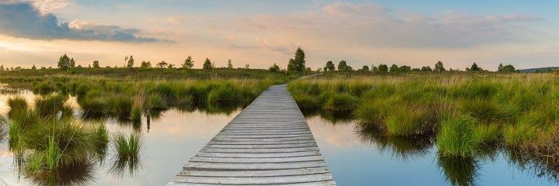 Venngucker – Natur am Abend!
