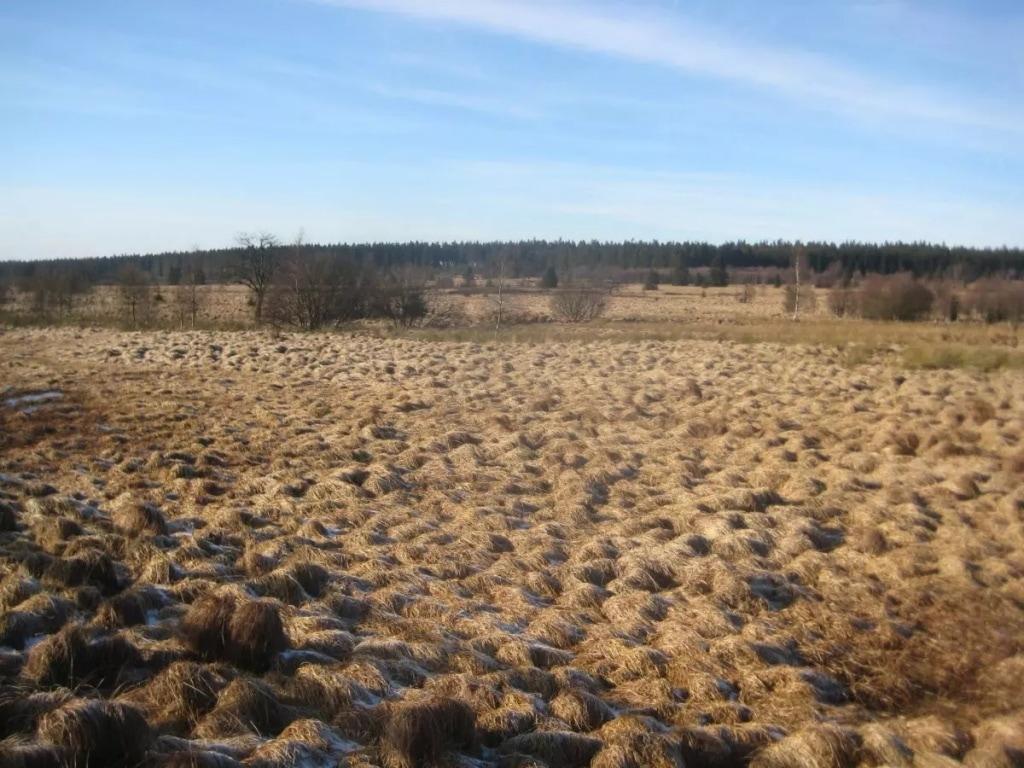 Wanderung -  Venngucker – Natur am Nachmittag!