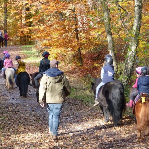 Reiten - Jacky's Pony Hof