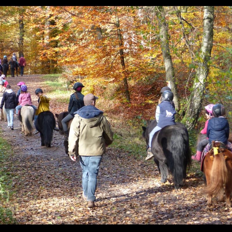Équitation - Jacky's Pony Hof